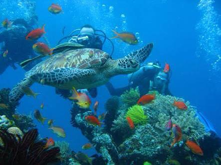 diving phillipines 2